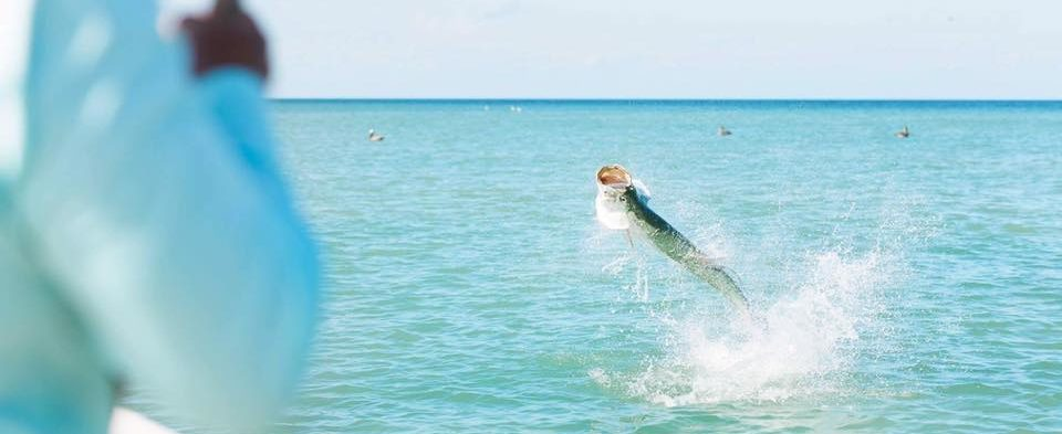 Sanibel Captiva Tarpon