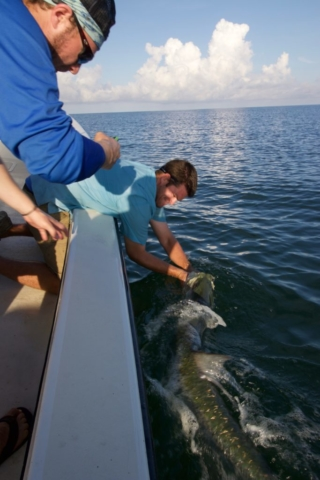 Captiva Tarpon Sanibel