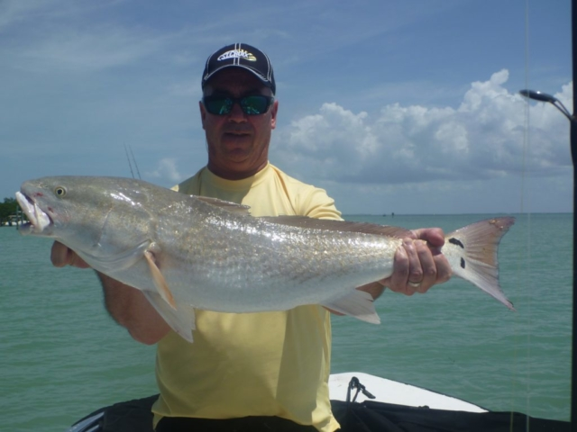 Captiva Redfish