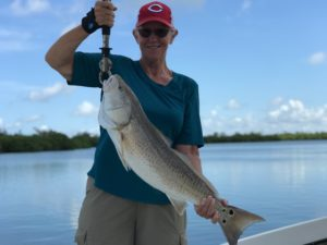 SWFL Redfish